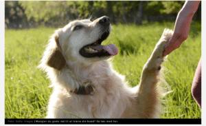 Gode råd til hundeejere - sådan får du en gladere hund